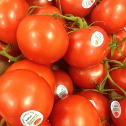 Hot House Tomatoes, $1.69/lb!