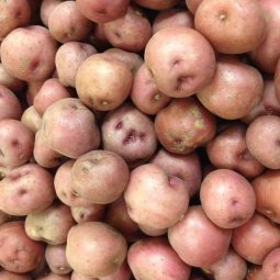 Red Potatoes on Sale this Week! Click to see our Weekly Specials!